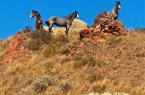wild-horses-in-north-dakota-badlands-ruth-hager
